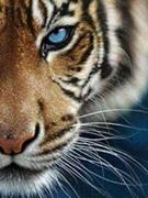 ForeverDetroit TigersFan