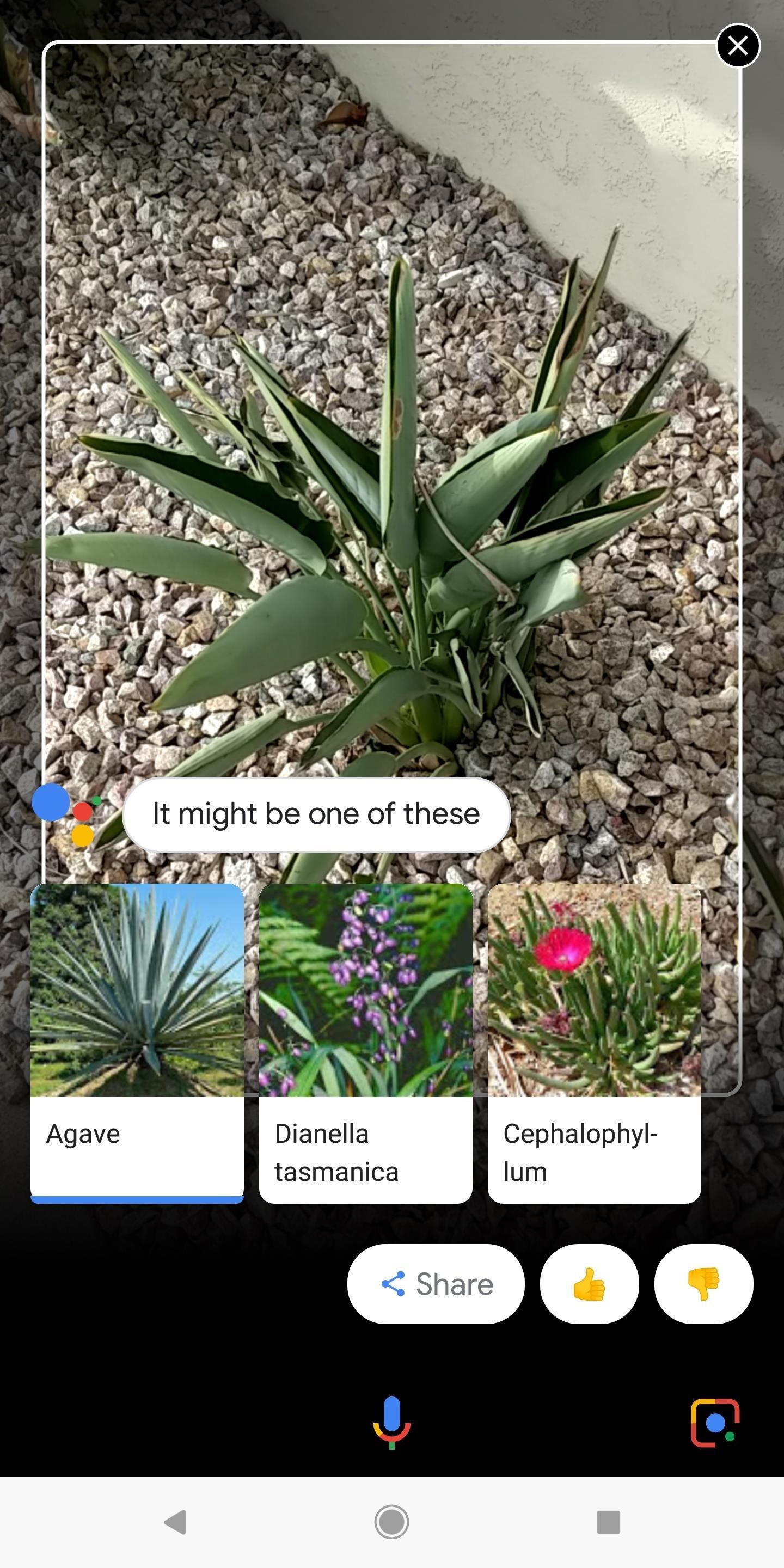 Everything You Should Know About Google Lens on the Pixel & Pixel 2