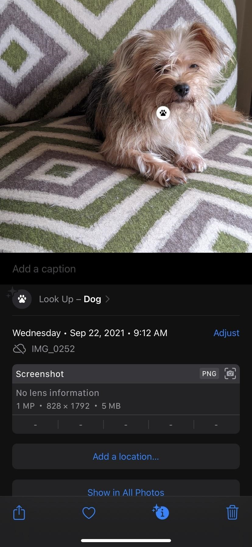 How to Copy Text from Real World & Photos via Live View for iPhone on iOS 15