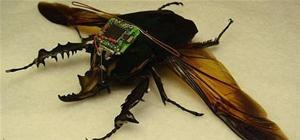 Shh...Cyborg Spy Beetles Released by DARPA