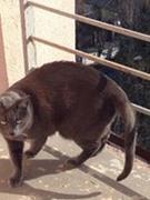Nadia LeafClancat