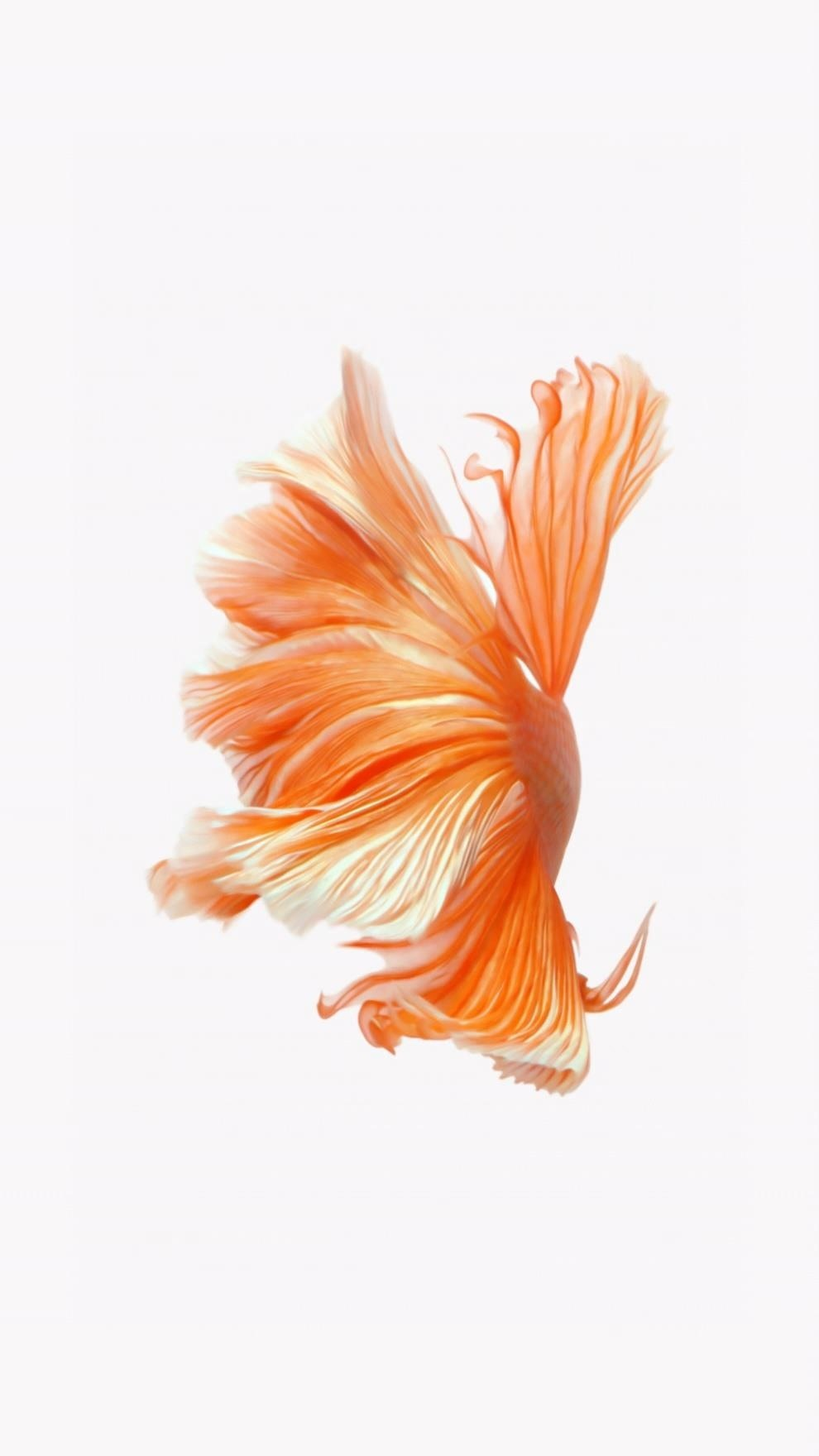 how to get apples live fish wallpapers back on your