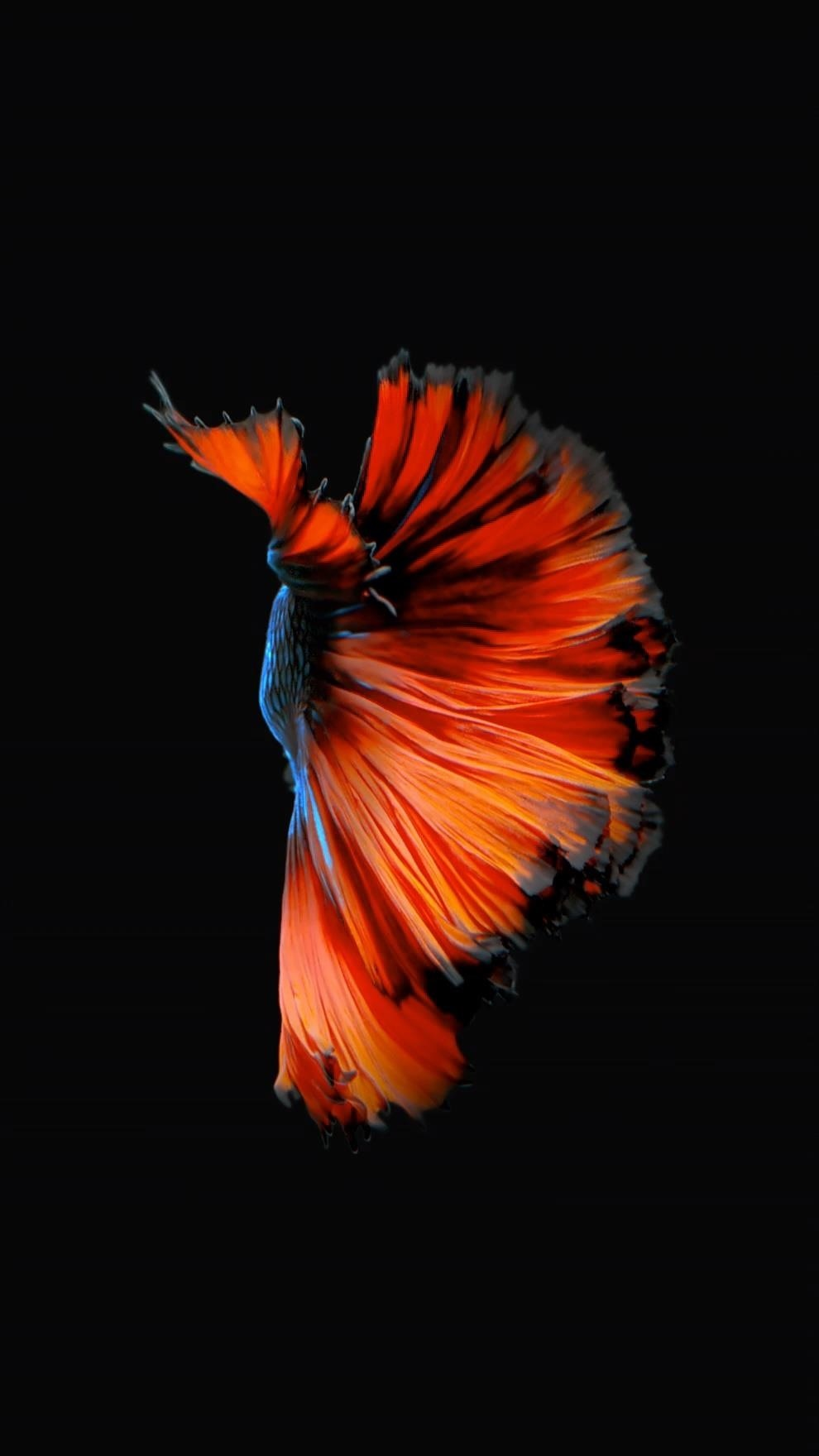 How to Get Appleu0027s Live Fish Wallpapers Back on Your iPhone « iOS
