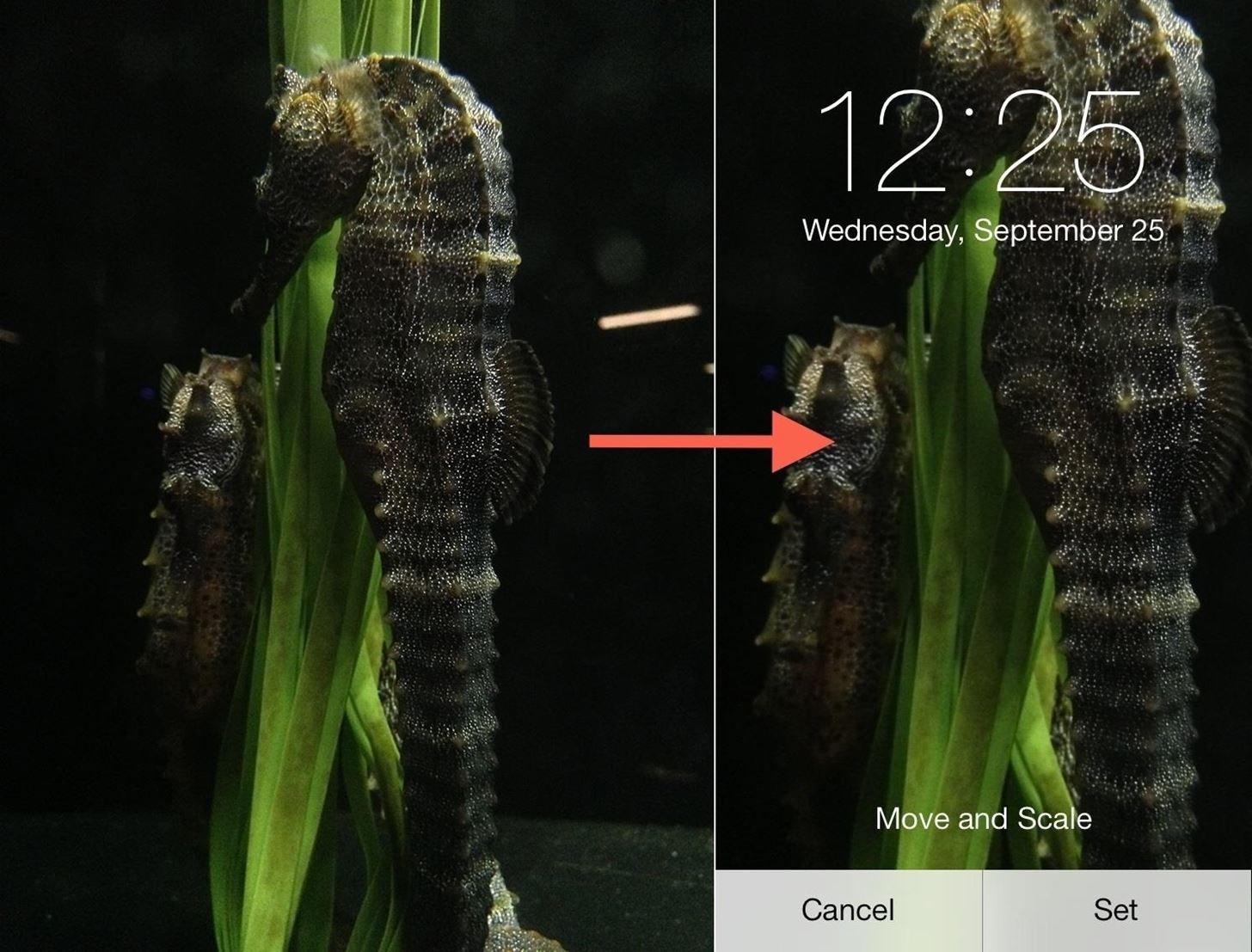 Fixing iOS 7 Wallpaper Woes: How to Scale, Crop, Align, & Design the