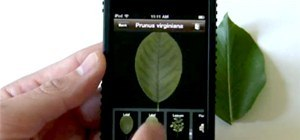 Identify Tree Species in Just One Click