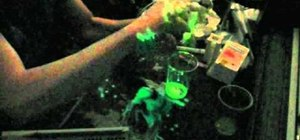 Make an OLED demonstration cell with blue glow stick juice